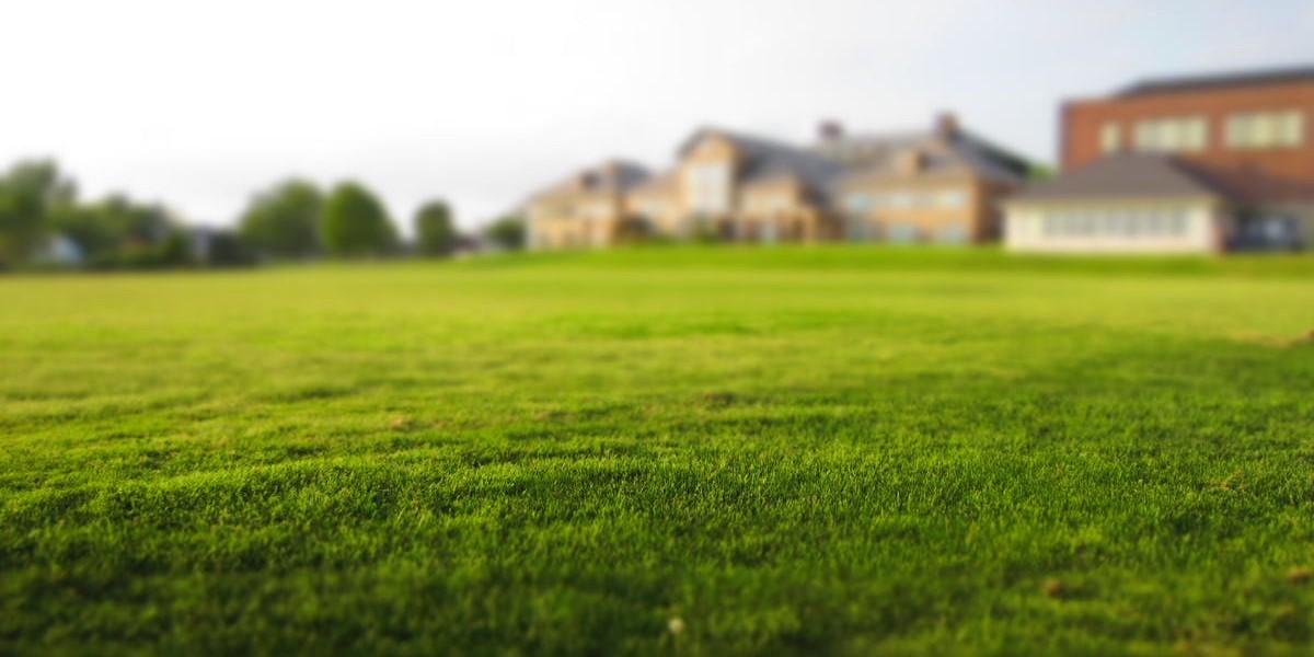 Ny græsplæne på 24 timer