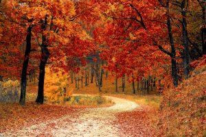 Afslapningsmetoder: I det kommende efterår