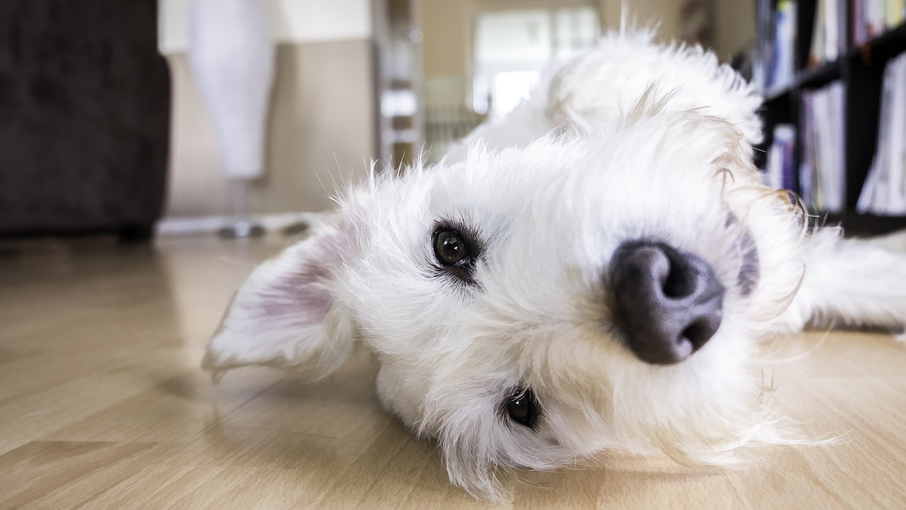 Få glæde i dit hus med en hund