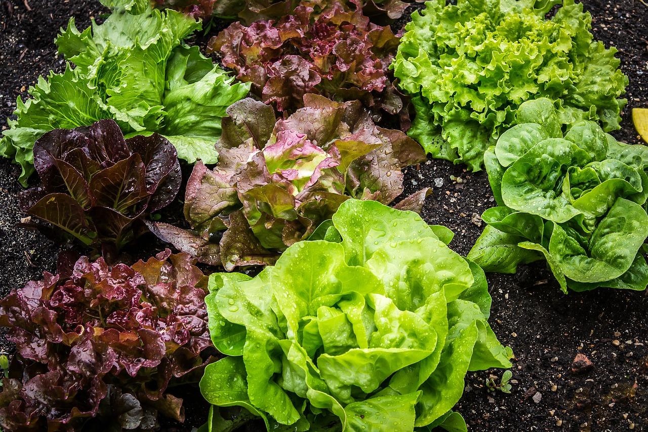 Grøntsagshaven er det perfekte ferieprojekt