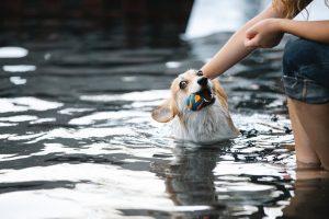 Bliv klar til en sommer på vandet med din hund: køb en svømmevest